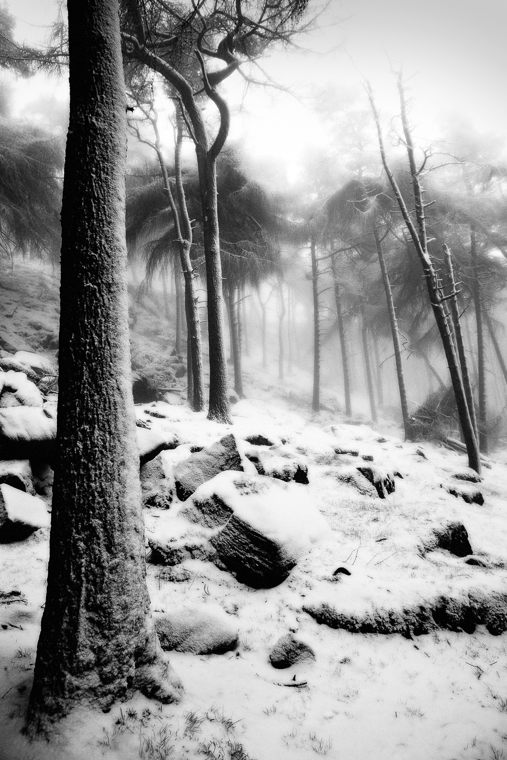 Peak District Winter Photography Tips winter trees Jon Cruttenden