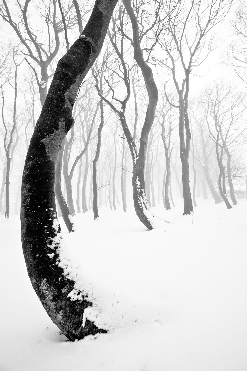 Peak District Winter Photography Tips curved tree in winter Jon Cruttenden